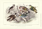 Gold Finch, Buntings, & Wrens
