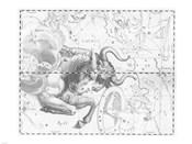 Taurus by Johannes Hevelius