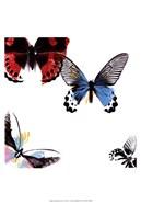 Butterflies Dance I