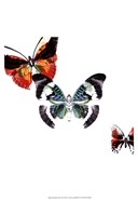 Butterflies Dance III