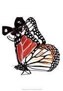 Butterflies Dance IV