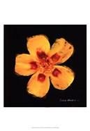 Vibrant Flower X