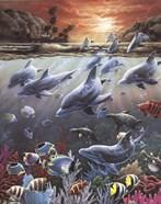 Underwater Splendor