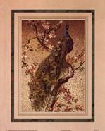Peacock And Dogwood