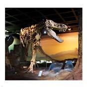Tyrannosaurus Fossil Reproduction