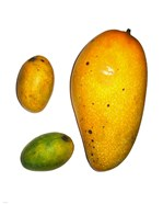 Example of Mangoes