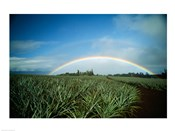 Makawao, Rainbow over farm, USA, Hawaii