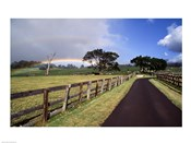 Rainbow over pineapple fields, Makawao, Maui, Hawaii, USA