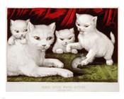 Three Little White Kitties