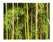 Bamboo Richelieu