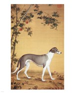 Greyhound by Bamboo