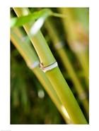 Close-up of bamboo shoots