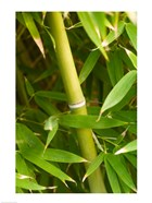 Close-up of a bamboo shoot with bamboo leaves