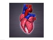 Close-up of a human heart