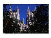 Trees in front of a cathedral, Washington National Cathedral, Washington DC, USA