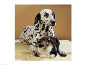 Dalmatian and Cat