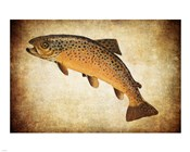 Brown Trout II