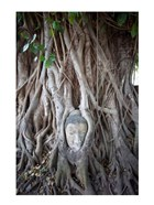 Buddha Head in the Roots of a Tree