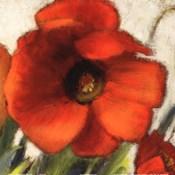 Poppy Splendor Square II (Close up)