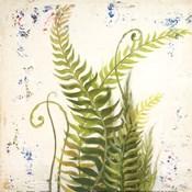 Nice Ferns I