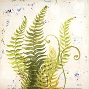 Nice Ferns II