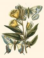 Butterfly Oasis II