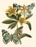 Butterfly Oasis III