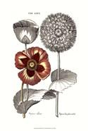 Tinted Floral II