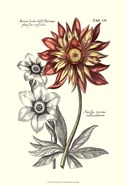 Tinted Floral III