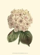Pastel Blooms III