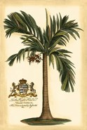British Colonial Palm I