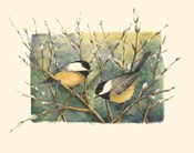 Chickadees and Pussy Willow