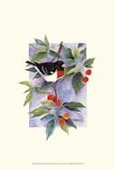 Red-Breasted Grosbeak