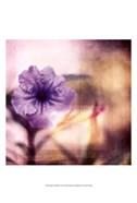 Purple Tranquility I