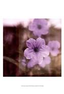 Purple Tranquility II