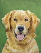 Dog Portrait-Golden