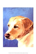 Dog Portrait-Yellow Lab