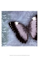 Butterfly Notes X