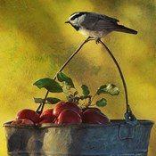 Apples &amp; Chickadee