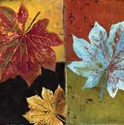 colorful maple II