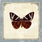 Parisian Butterfly