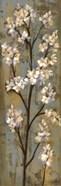 Almond Branch I