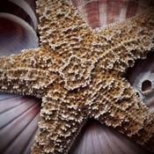 Macro Shells I