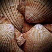 Macro Shells VI