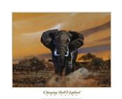 Charging Bull Elephants
