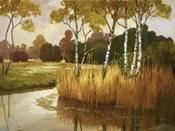 Reeds, Birches & Water II