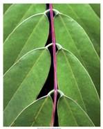 Leaf Design II