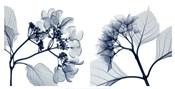 Hydrangeas [Positive]