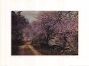 Blossom Bordered