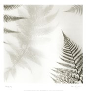 Ferns No. 2